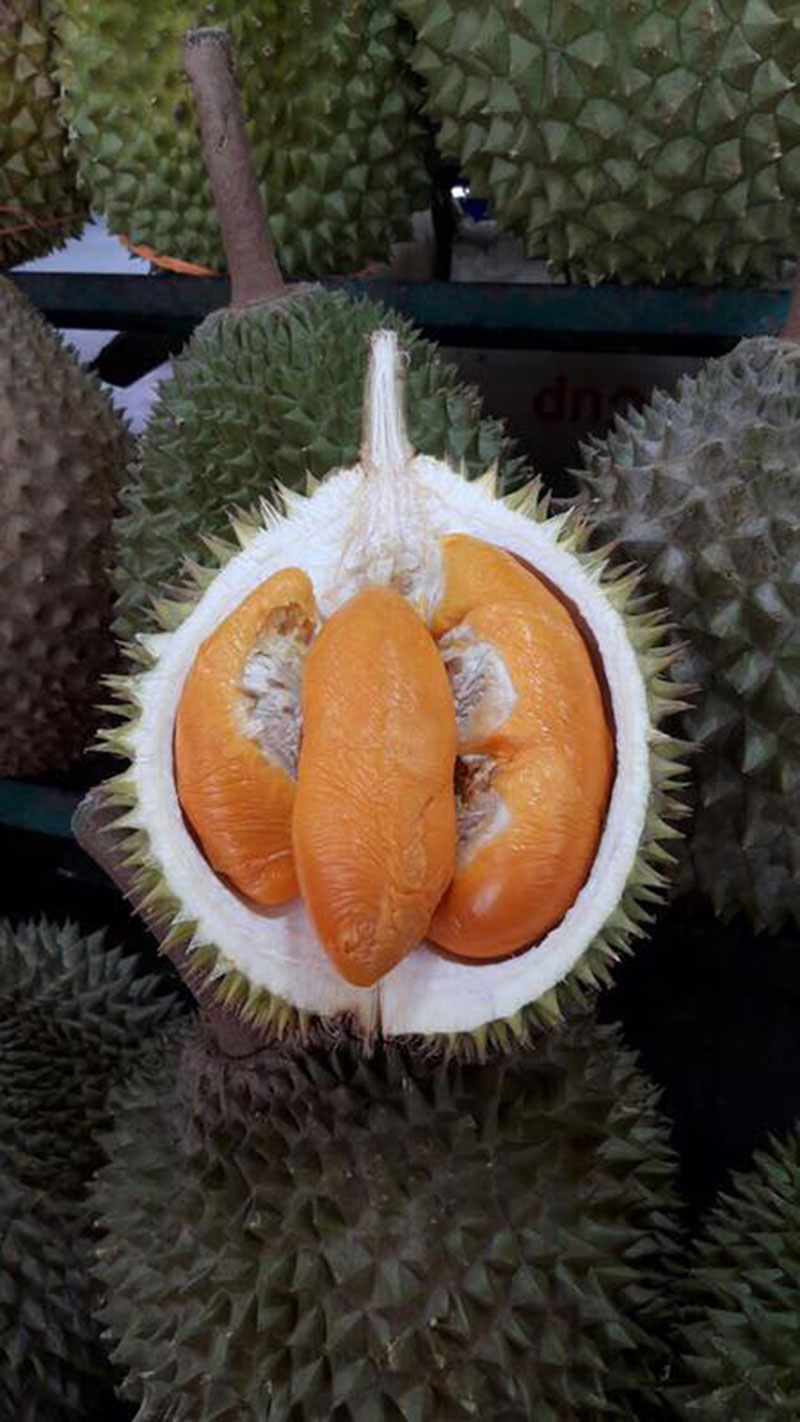 Durian 015