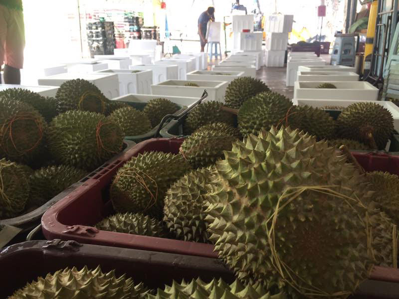 Durian 017